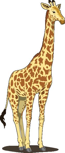 Giraffe clip art at. Tall clipart