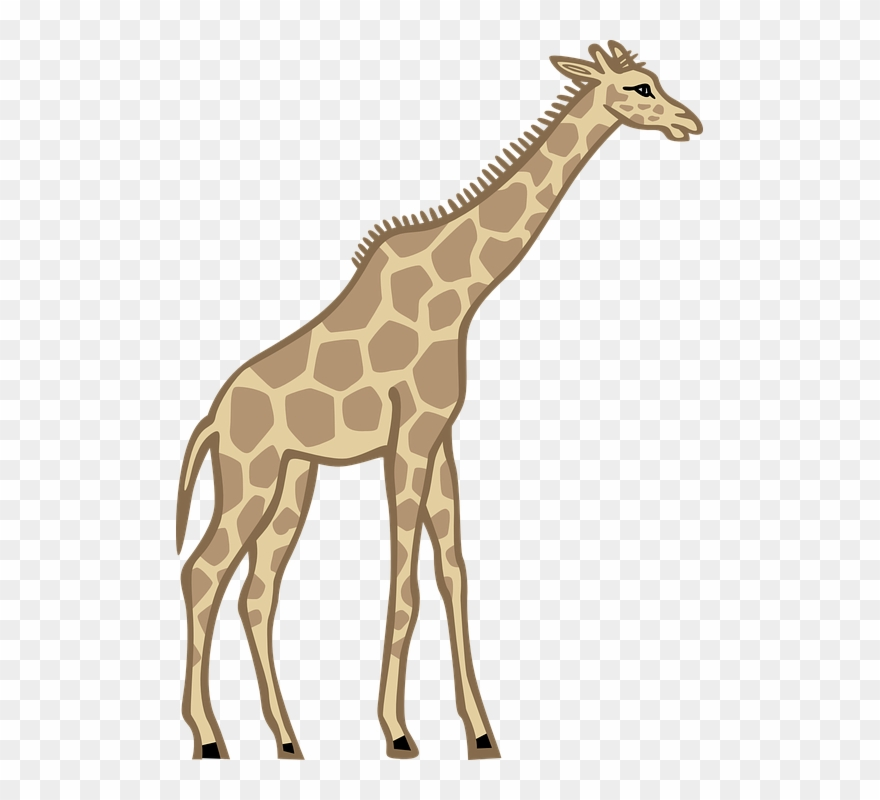 Giraffe clipart tall thing. Free photos and pictures