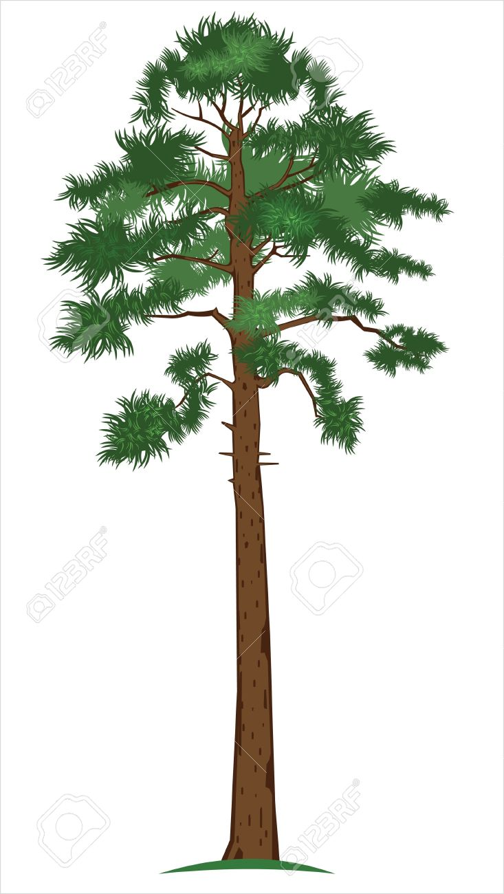 Tall clipart tall object. Collection of free download