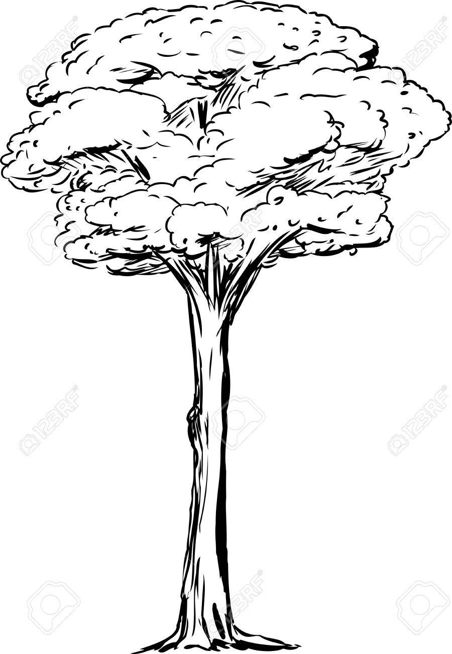 Outined station . Tall clipart tall tall tall tree