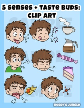 5 Senses + 5 Tastebuds Clip Art Set (plus extras!) by Rossy's Jungle