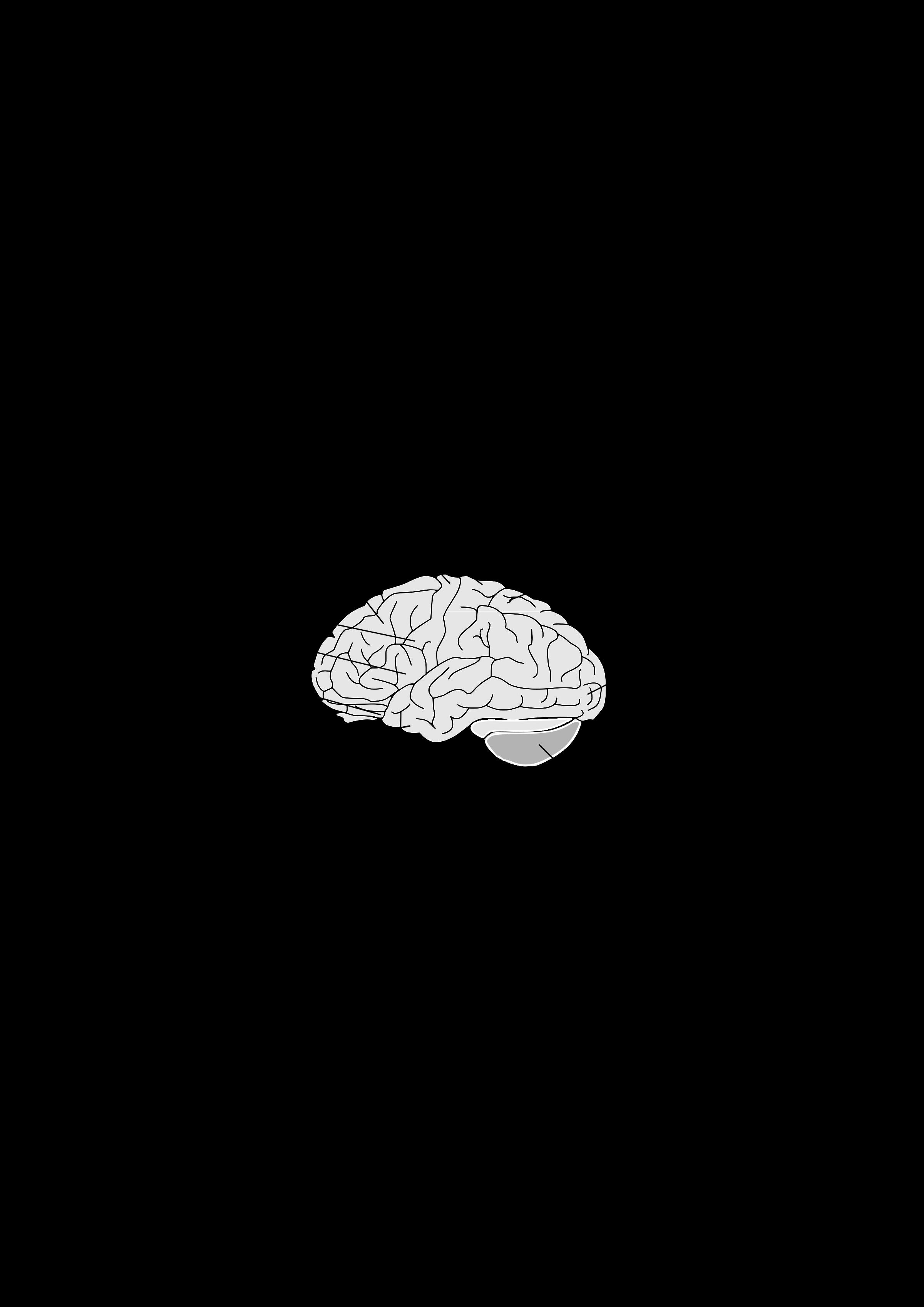 Human brain big image. Taste clipart area