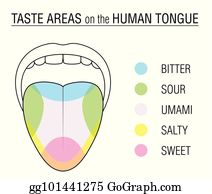 Eps illustration tongue areas. Taste clipart area