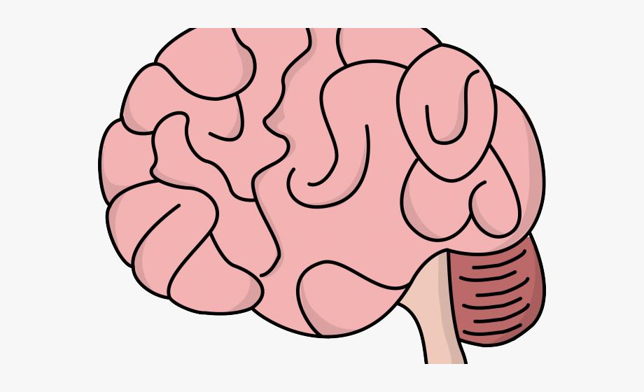 Bacteria transparent background cartoon. Taste clipart brain