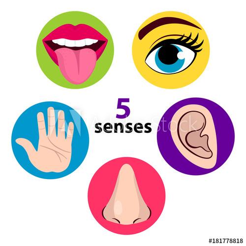 Taste clipart sense sight. Set of five human