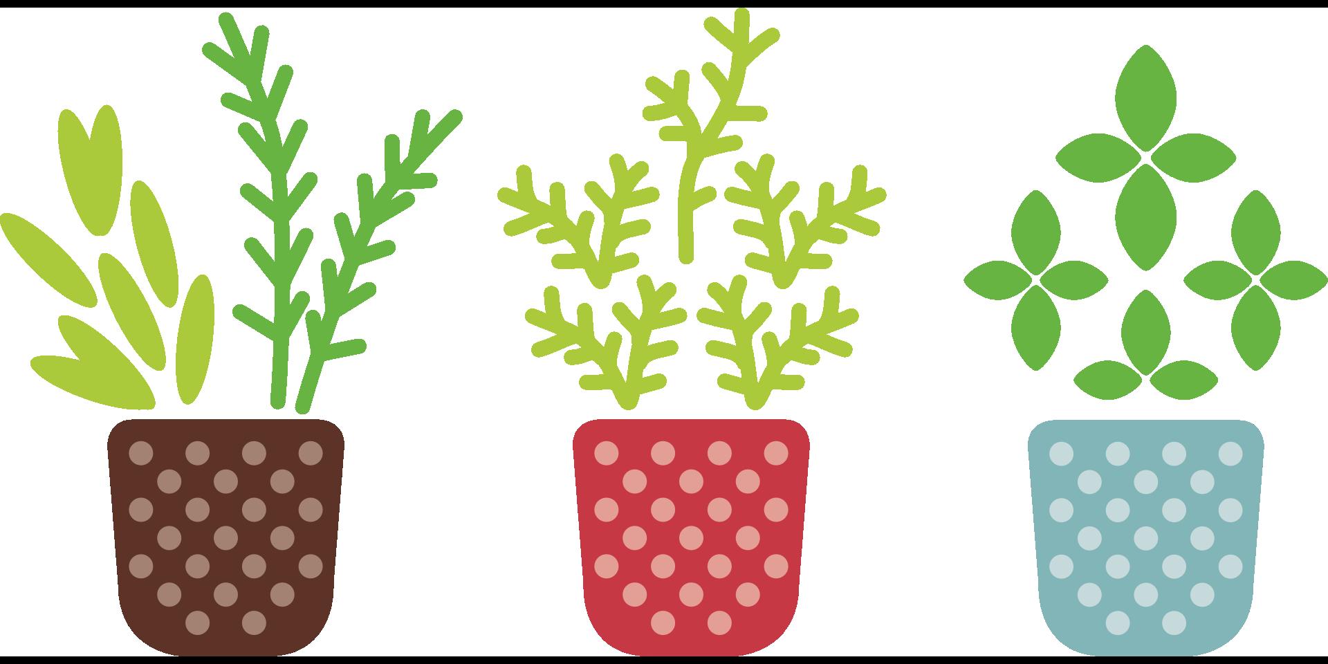 Keeping lettuce and herbs. Tea clipart herbal leaf