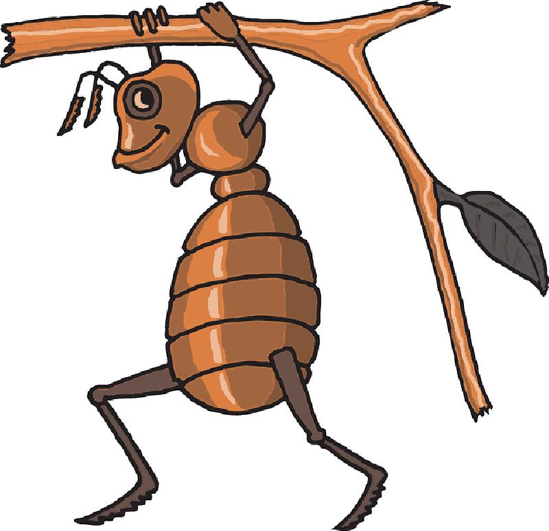 Teamwork clipart ant, Teamwork ant Transparent FREE for ... - photo#30