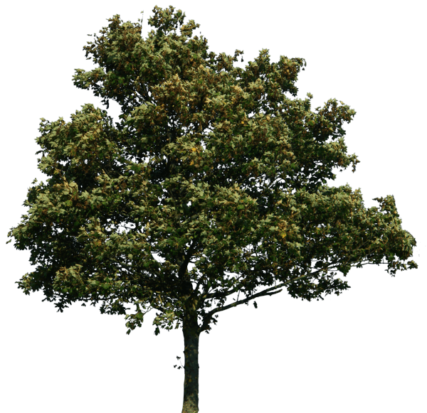 Download png image picture. Teamwork clipart tree