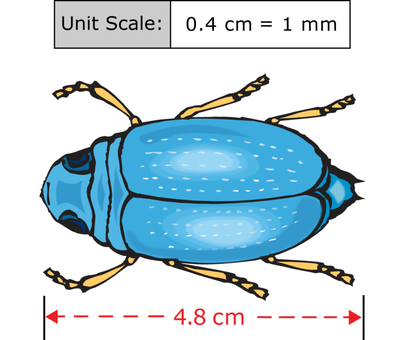 Textbook clipart unit rate. Scale to find actual