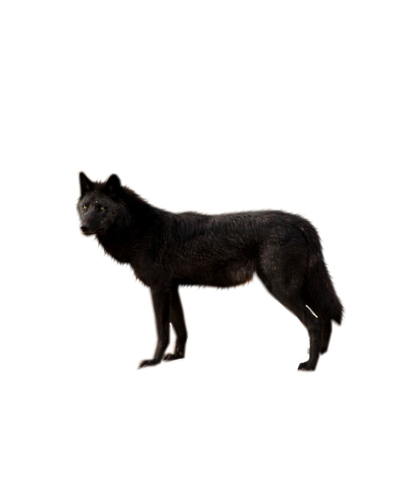 Black png transparent images. Tired clipart wolf