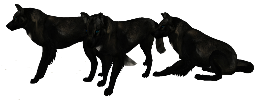 Black wolf png transparent. Wolves clipart realistic