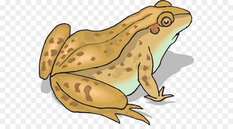 Frog and amphibian clip. Toad clipart