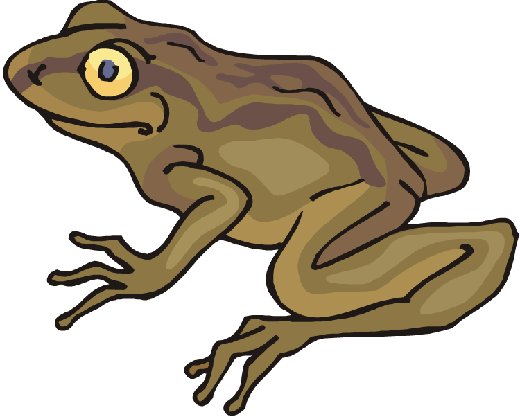 Brown . Toad clipart
