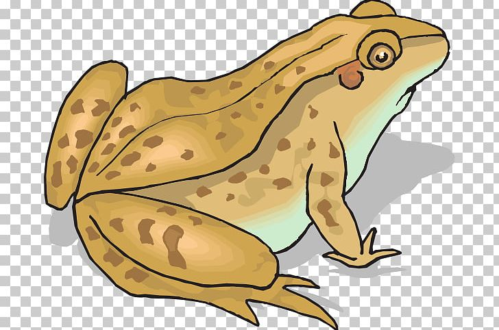 Toad clipart cane toad. Frog and amphibian png