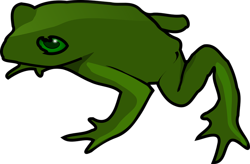 Toad clipart cane toad. Frog and png transparent