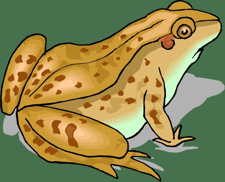 Toad clipart cane toad. Free ltt clip art