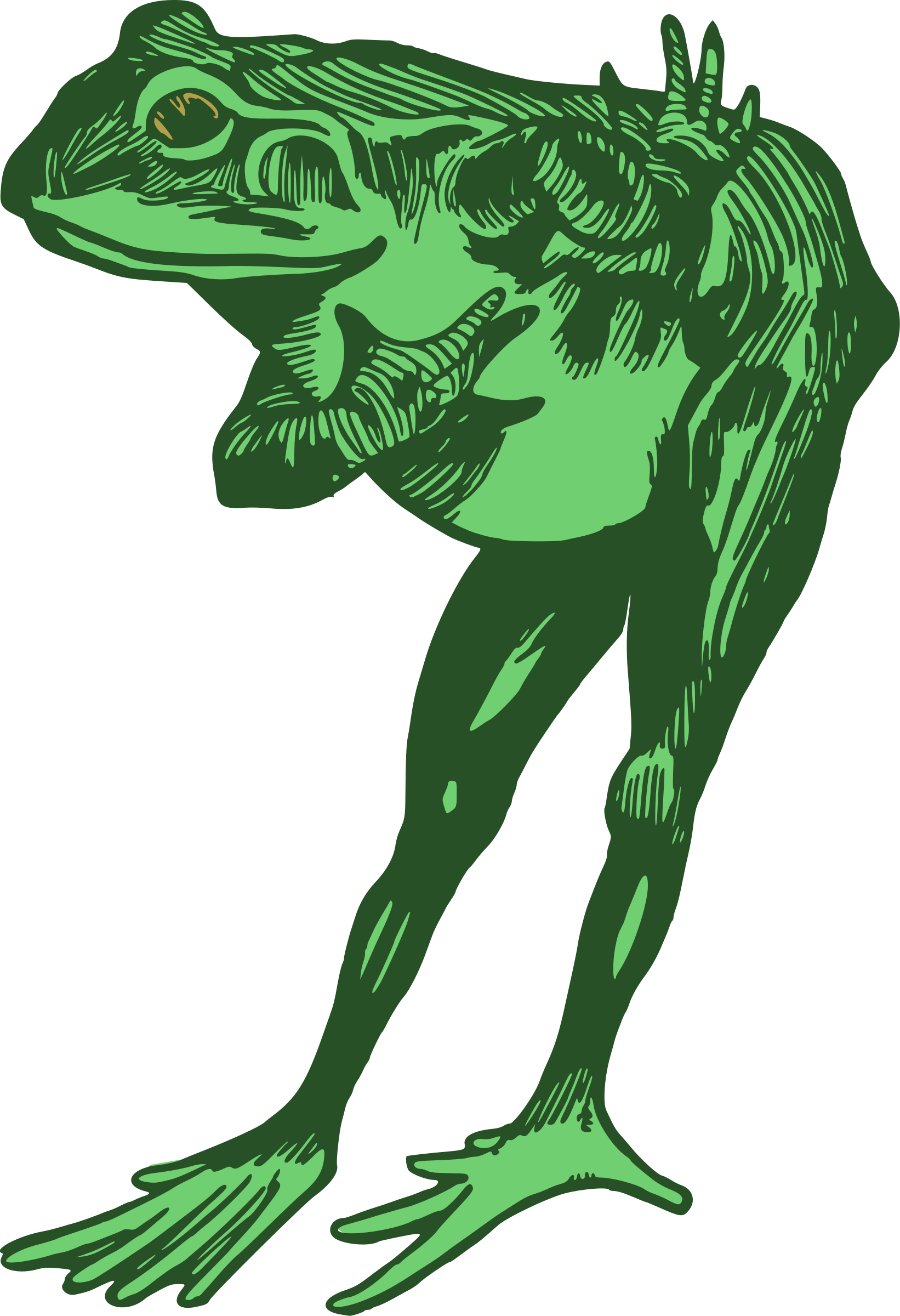 Frog big image png. Toad clipart colour green