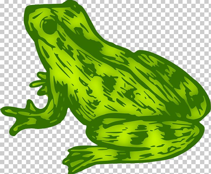 Toad clipart colour green. True frog kermit the