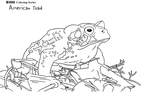 Toad clipart colouring page. American coloring free printable