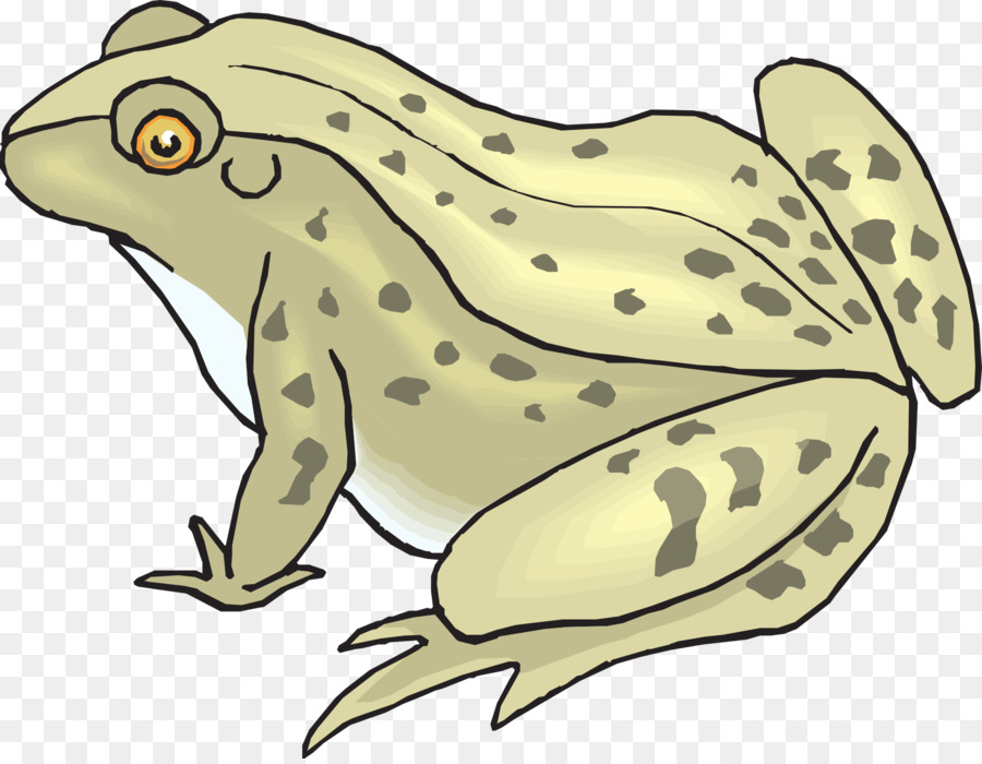Toad clipart frong. Fish cartoon frog wildlife
