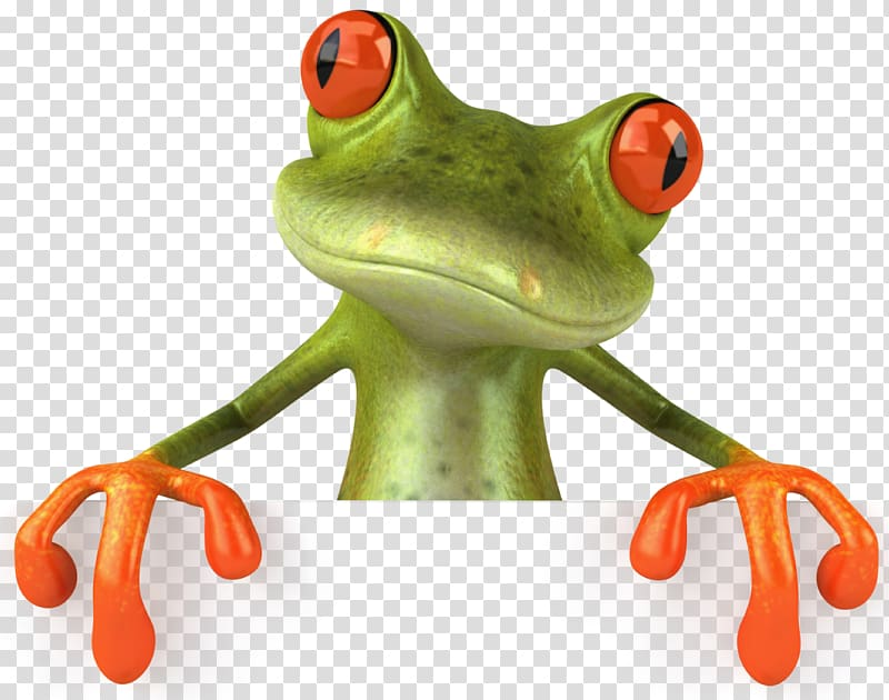 Toad clipart glass frog. Green and orange transparent