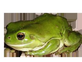 Clip art green tree. Toad clipart many frog