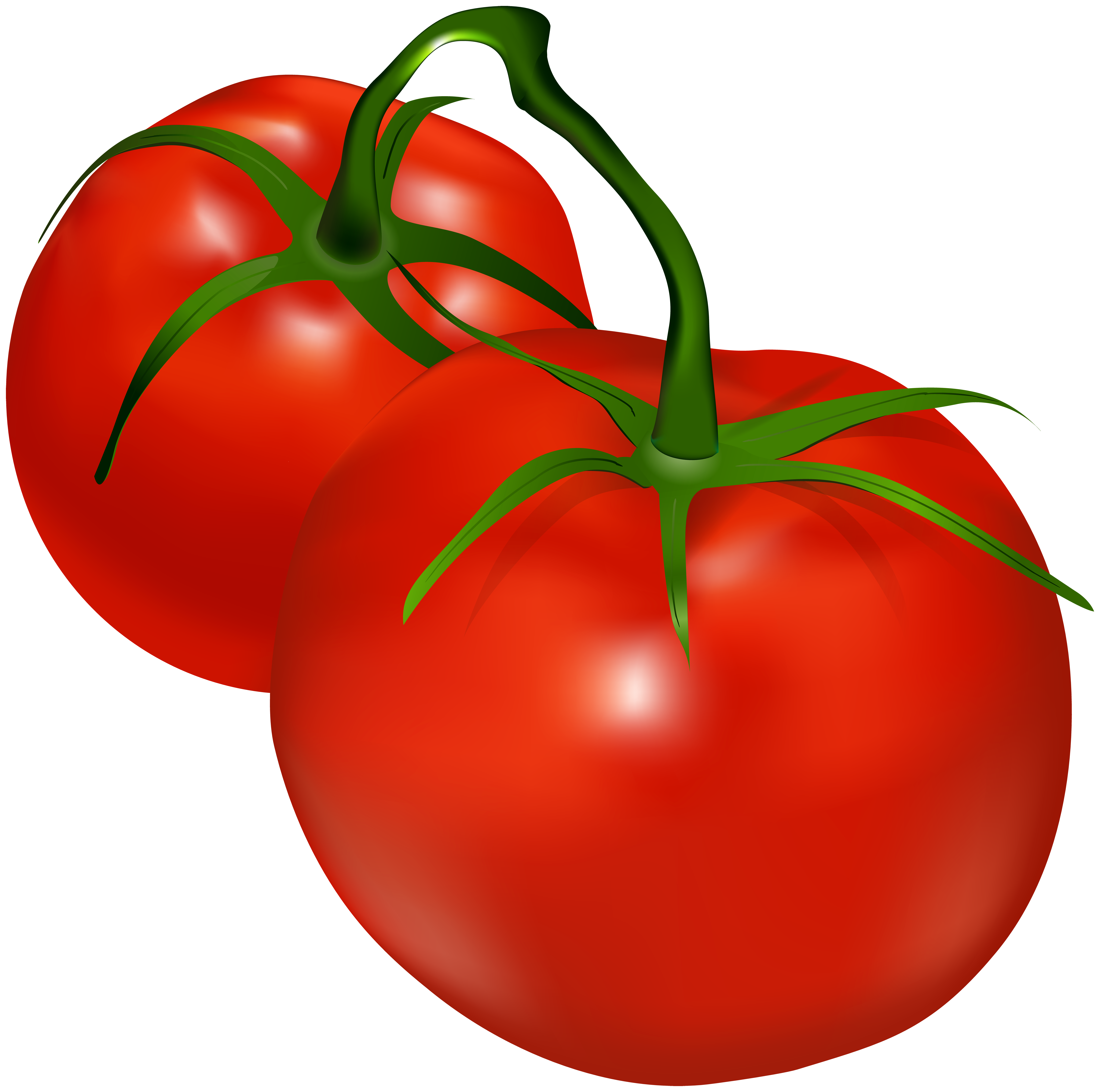 Tomatoes clipart. Transparent png clip art