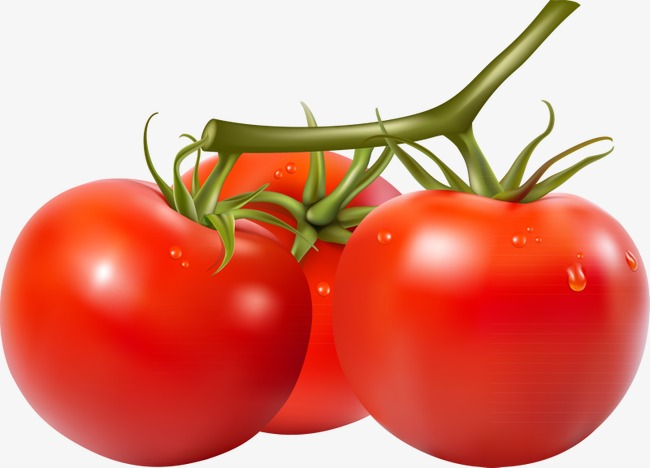 Tomatoes clipart. Hd tomato png image