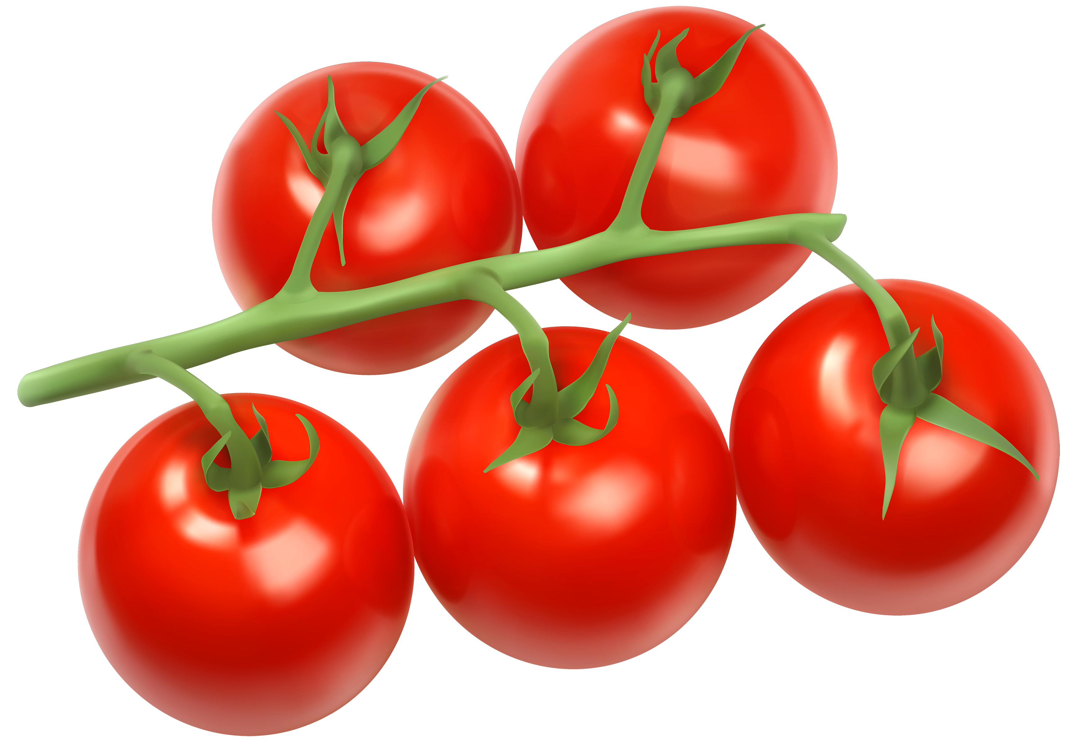 Branch png best web. Tomatoes clipart