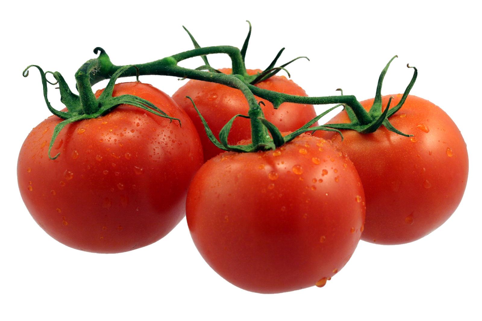 Color tomato information . Tomatoes clipart colour