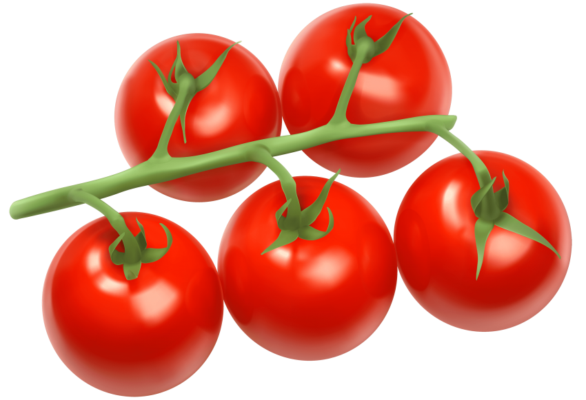 Branch png free images. Tomatoes clipart fresh