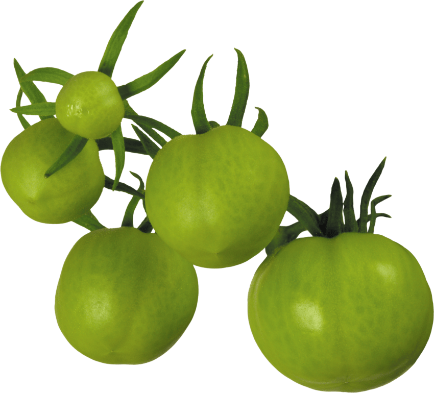 Png free images toppng. Tomatoes clipart green tomato