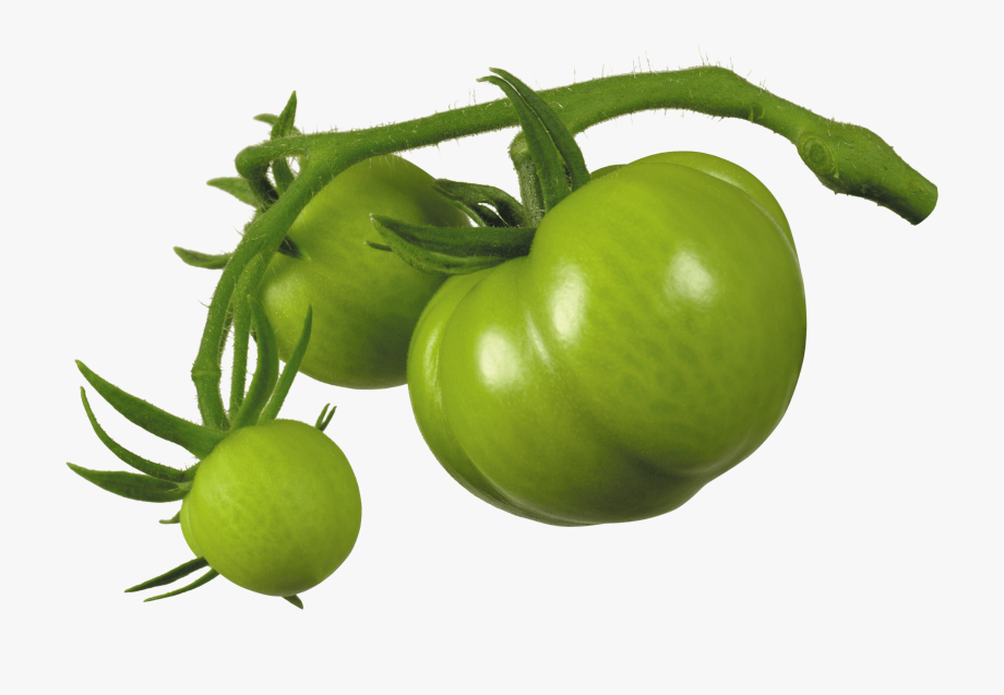Png transparent . Tomatoes clipart green tomato
