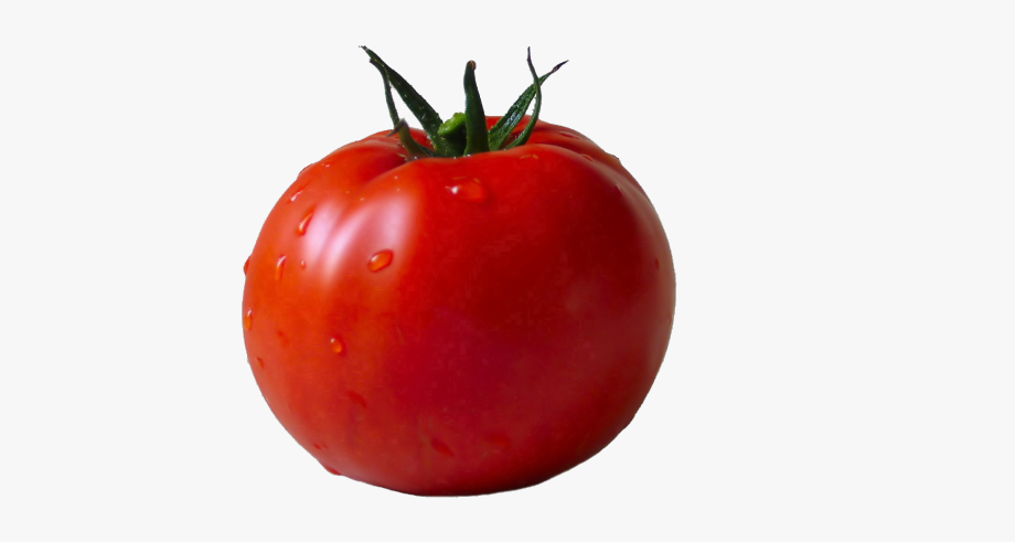 Tomato png transparent cliparts. Tomatoes clipart pokok