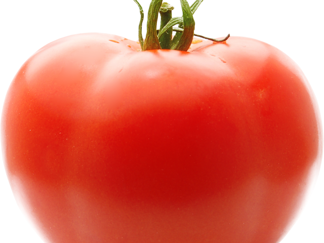 Free drawn tomato download. Tomatoes clipart pokok