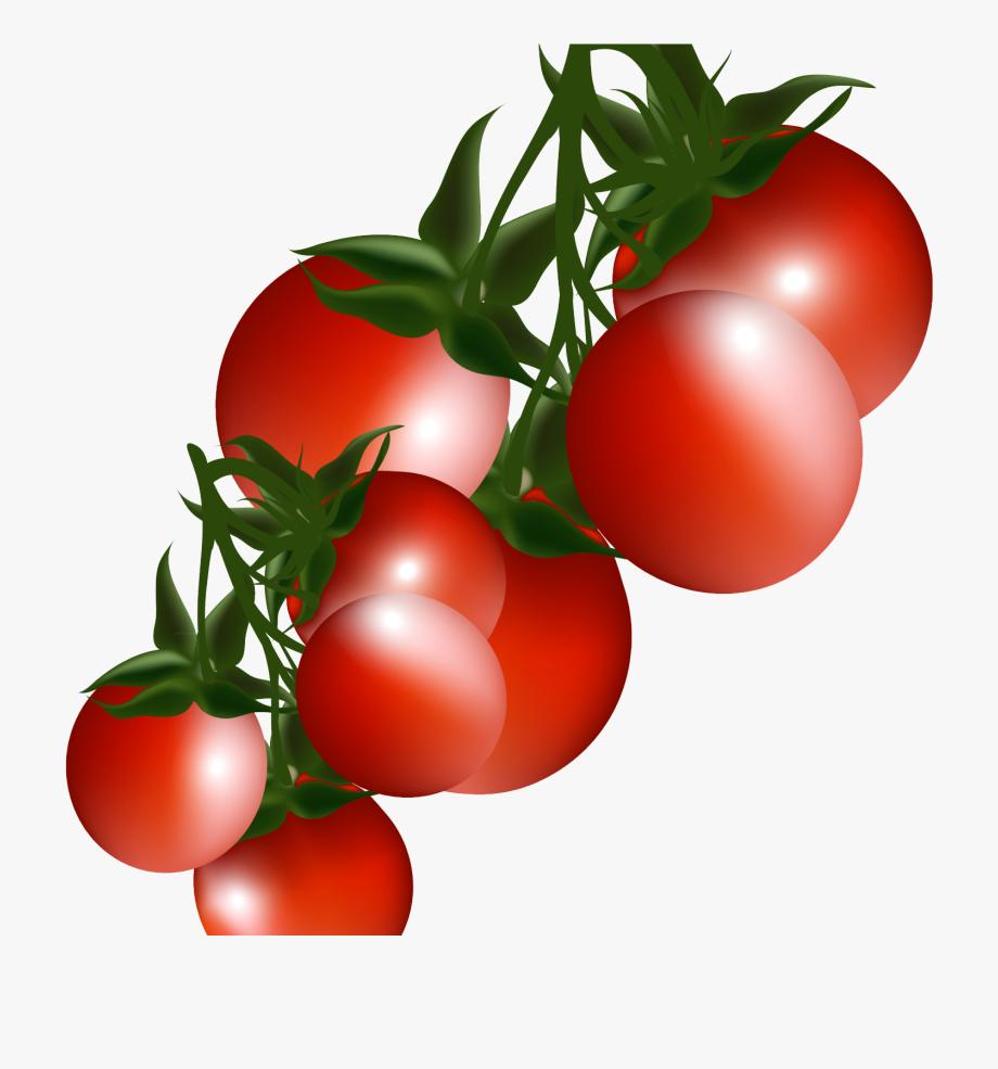 Tomatoes clipart pokok. Tomato plant clip art