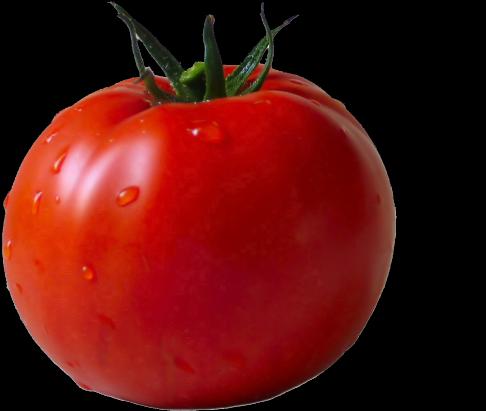 Tomato png transparent . Tomatoes clipart pokok