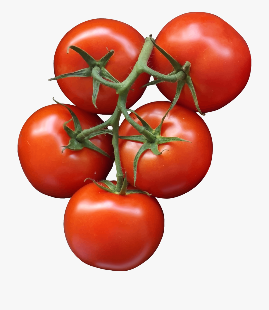 Tomato png cherry transparent. Tomatoes clipart printable