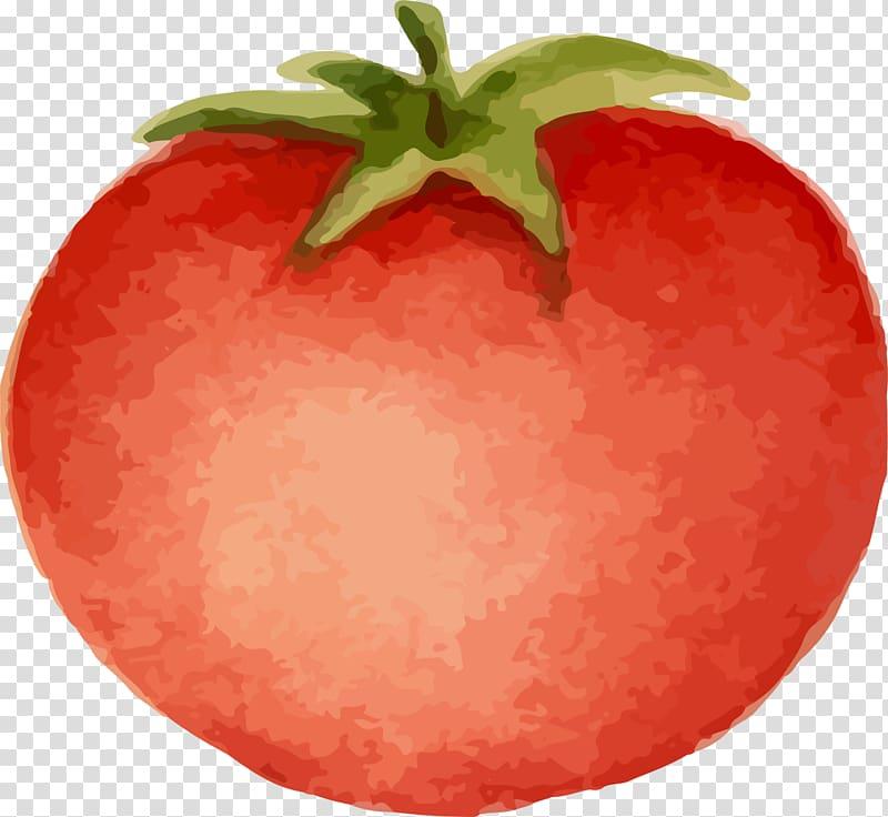 Tomatoes clipart splattered. Tomato cartoon animation hand