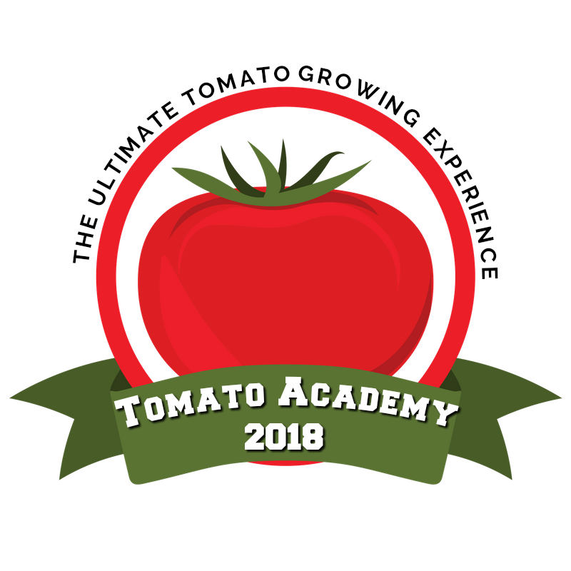 Tomatoes clipart tomato crop. Grow more with academy