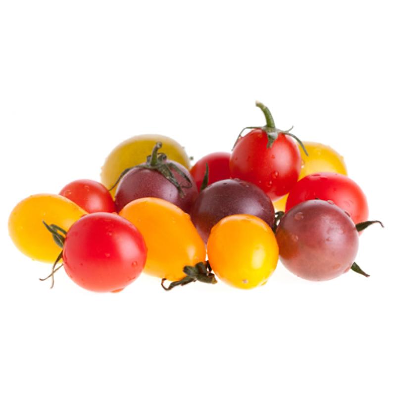 Tushita cherry . Tomatoes clipart tomato crop