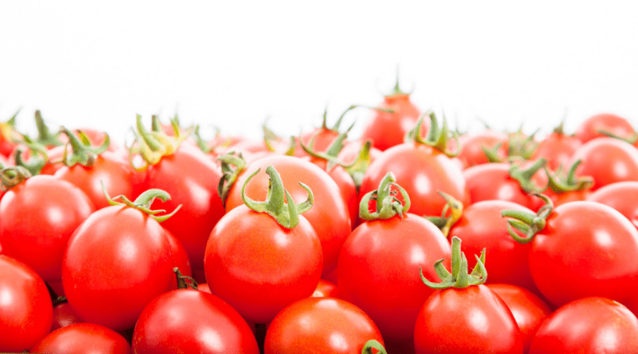 easy tips for. Tomatoes clipart tomato crop
