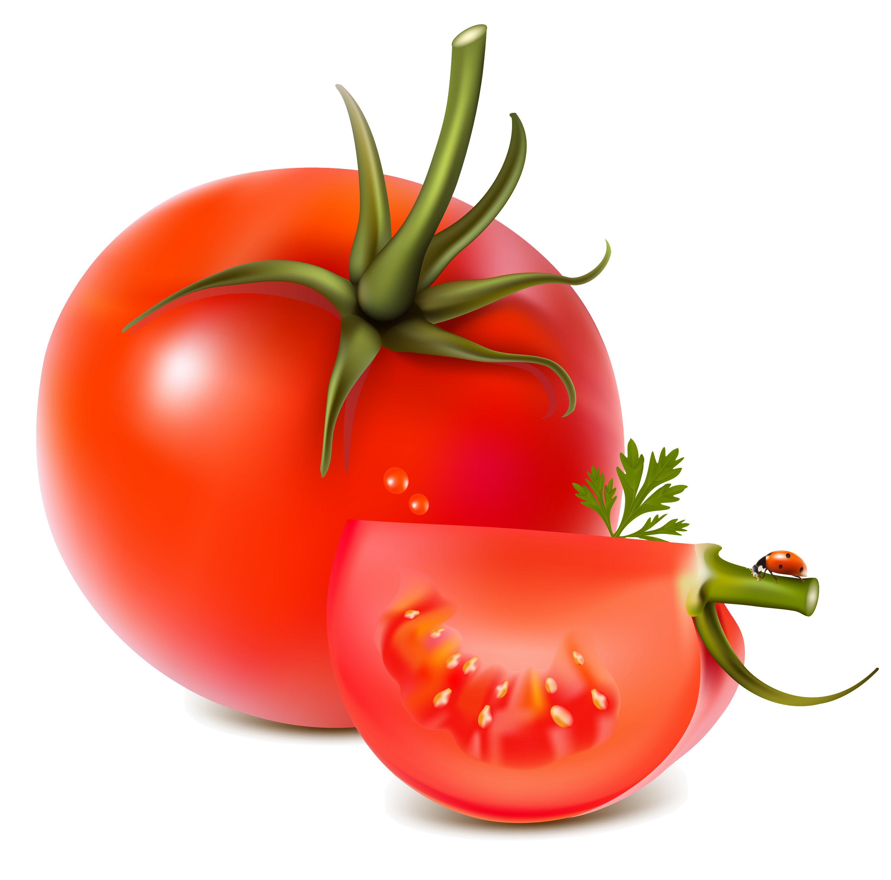 Pin by hopeless on. Tomatoes clipart tomato fruit