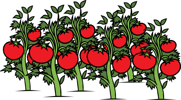 Free cliparts download clip. Tomatoes clipart tomato garden