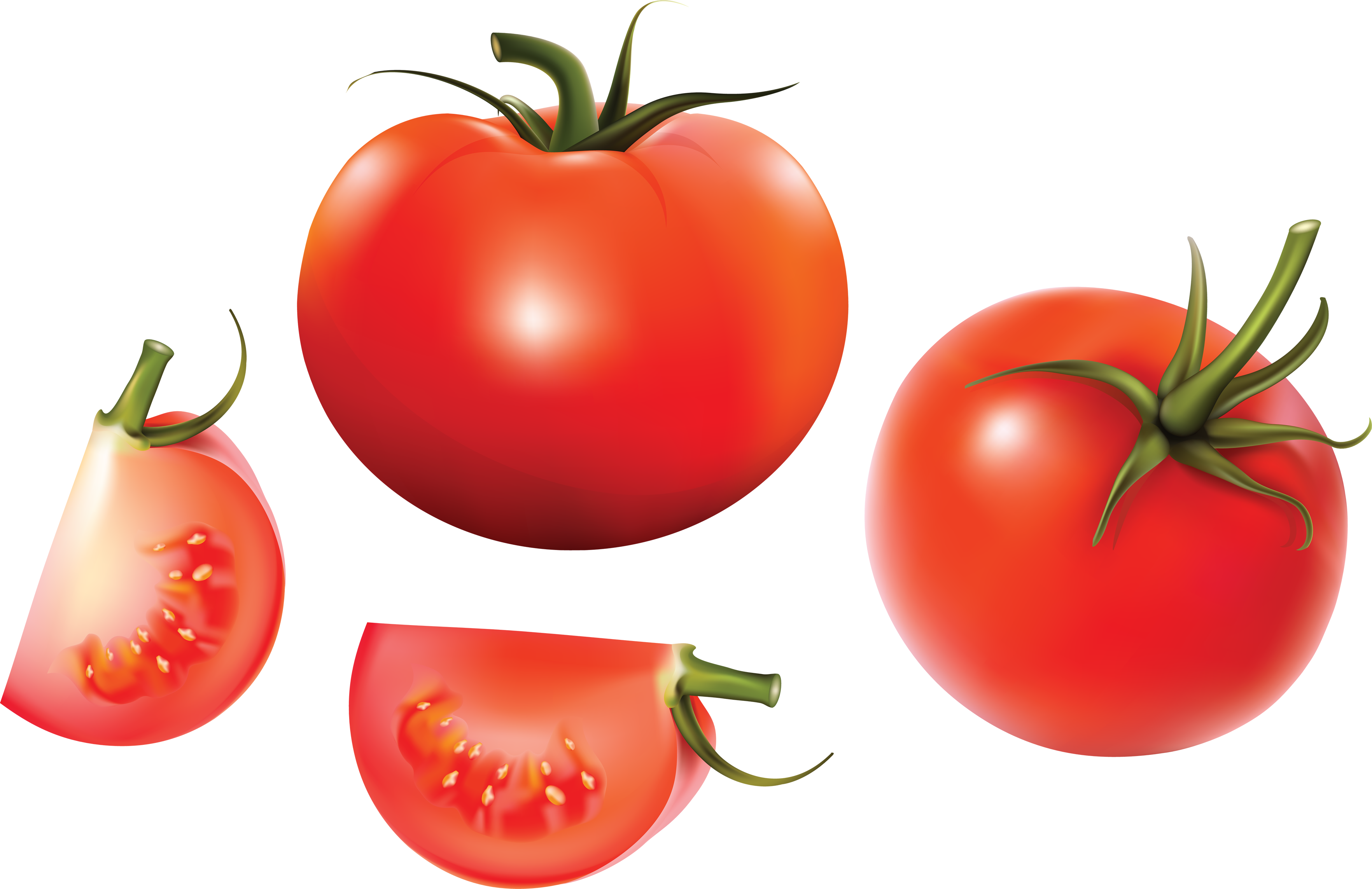 Pin by hopeless on. Tomatoes clipart tomato garden