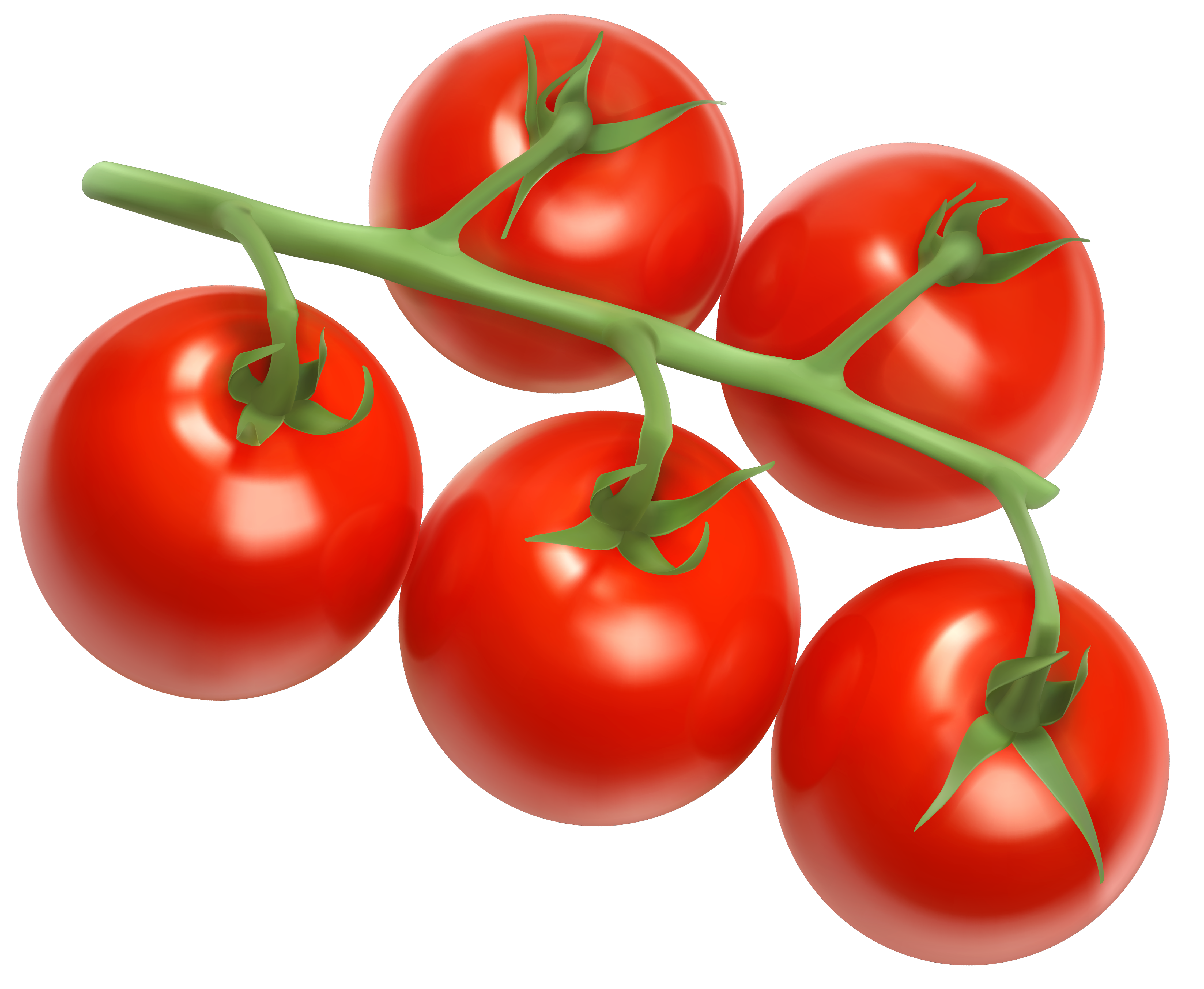 Png vector image gallery. Tomatoes clipart tomato leaf