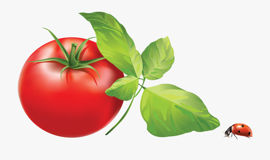 Tomatoes clipart tomato leaf. Download leaves clip art