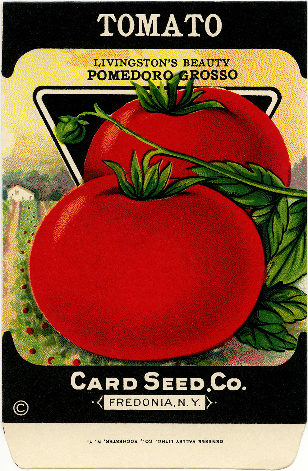 Tomatoes clipart tomato seed. Free vintage clip art