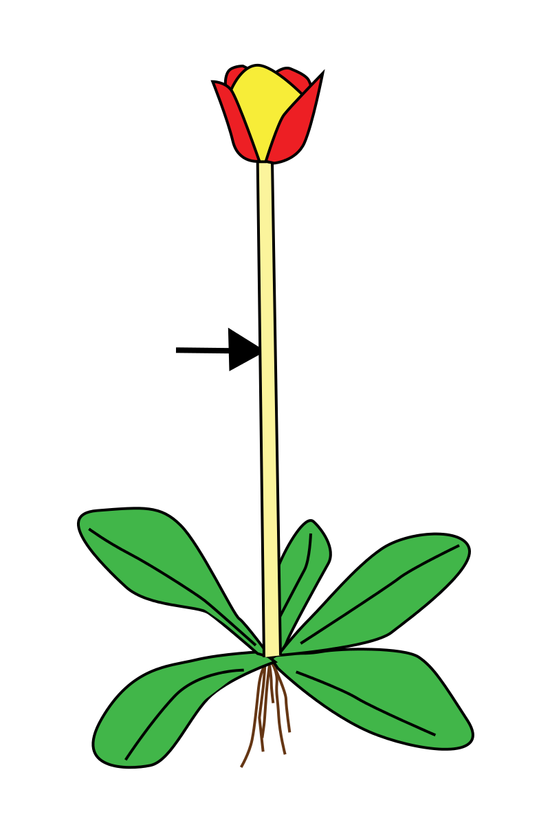 Bc reads adult literacy. Tomatoes clipart tomato stem