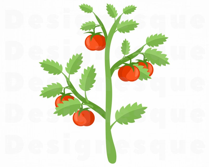 Svg files for cricut. Tomatoes clipart tomato vine